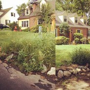 Fall Clean-Up #beforeandafter #treetrimm