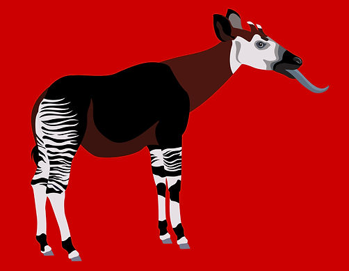 Okapi illustration
