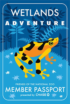 zoo Panamanian golden frog illustration