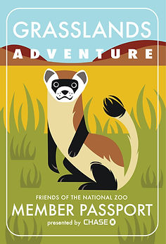 zoo black footed ferret illustration