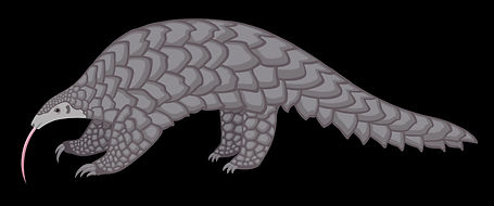 pangolin illustration