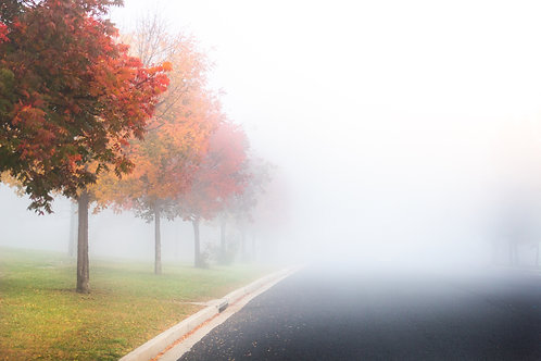 Autumn Colours in the Morning Fog 3 - Bathurst, NSW