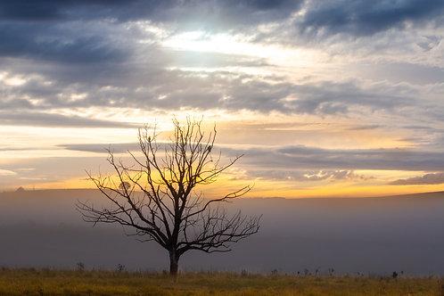 Sunrise Scene - Millthorpe, NSW