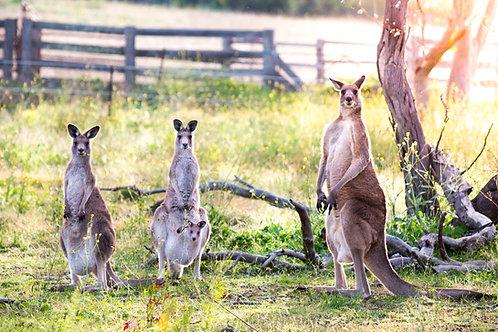 Family Photo - Bathurst, NSW