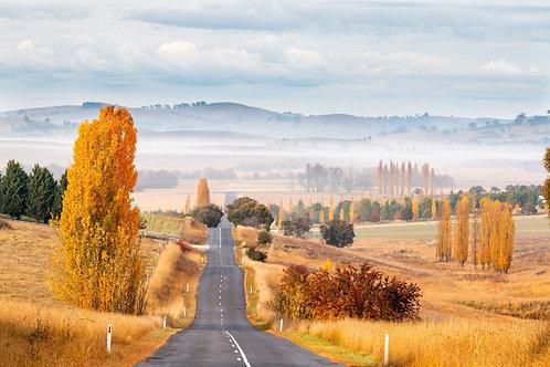 Autumn Road trip Landscape - Blayney, NSW 135 x 90cm Canvas