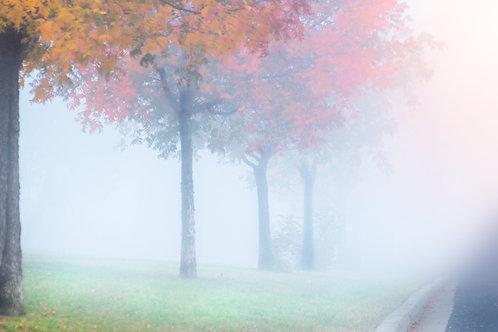 Autumn Colours in the Morning Fog - Bathurst, NSW