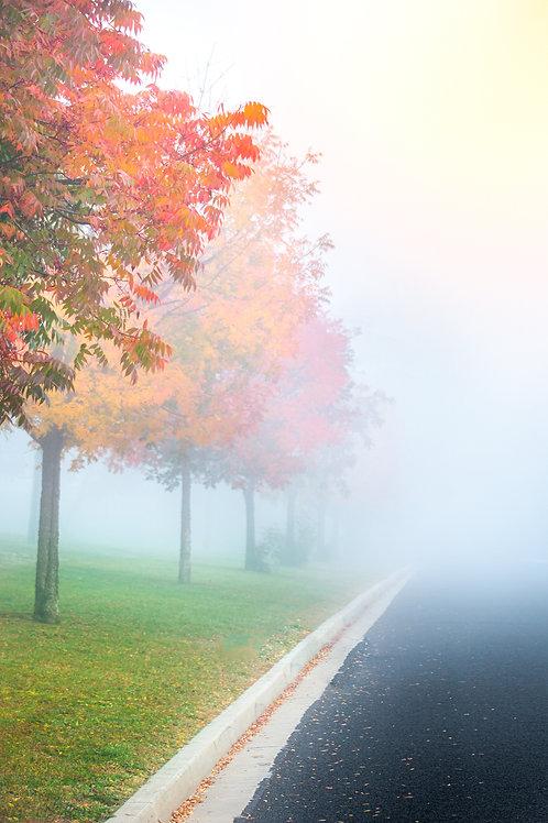 Autumn Colours in the Morning Fog 2 - Bathurst, NSW