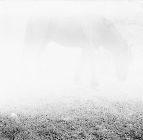 lucas_zambon_cheval.jpg