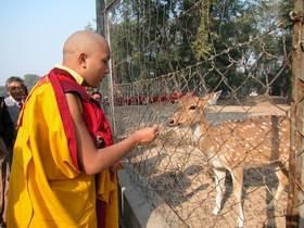 Recomendações do Gyalwang Karmapa sobre Vegetarianismo