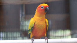 Bird Gender and Leg-Banding
