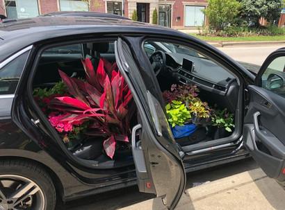 How to Plant an Urban Garden