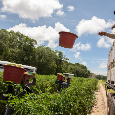 Worker Justice in the Food System