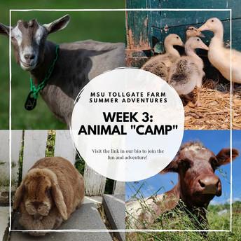 Animal Camp from Tollgate MSU.jpg