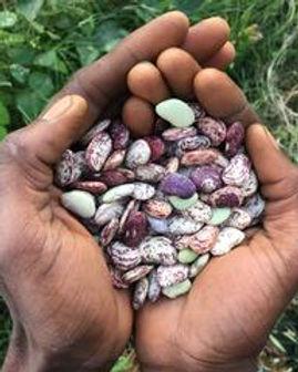 True Love Seeds.jpg