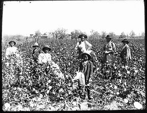 Black farming history1 .jpg