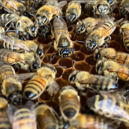3-Part Series: Lessons from the Honeybee on Change, Adaptation, and Storytelling