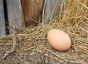 chicken egg.jpg