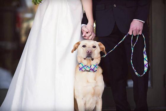 groom dog at wedding