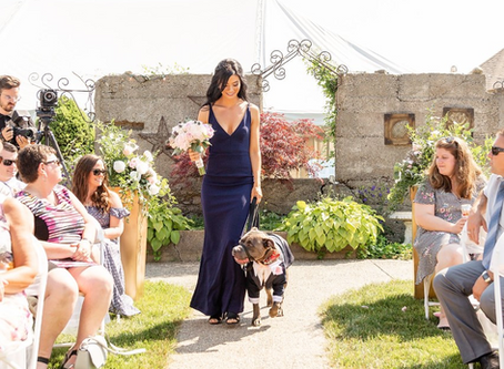 Four Legged Snap Shots: Must Have Photos of Your Dog on Your Wedding Day!