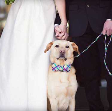 5 Ways to Include Your Dog in Your Wedding!