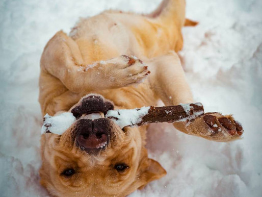 Winter can be ruff...but your dog's paws don't have to be!