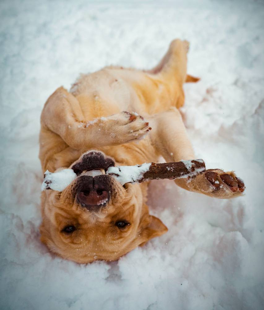 Protect your dog's paws this winter with these easy tips!