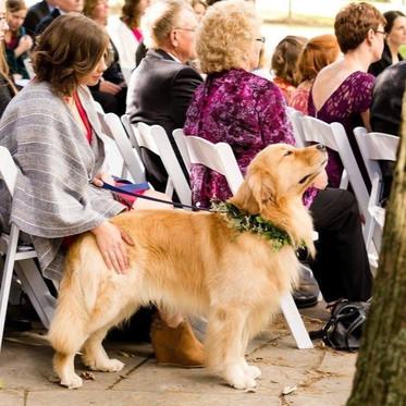 Think like a wedding dog attendant