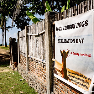 Kuta Lombok Dog Days