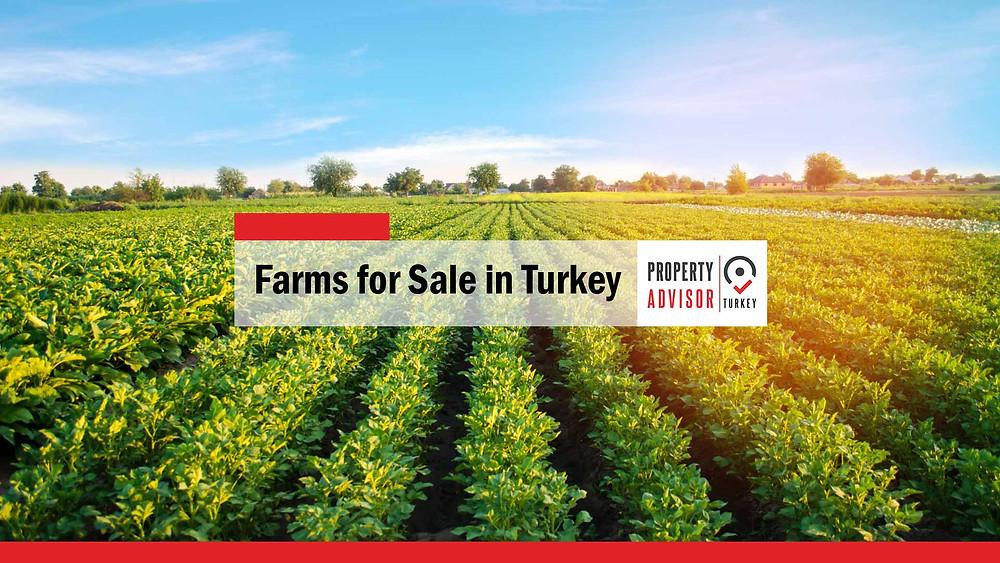farms for sale in turkey