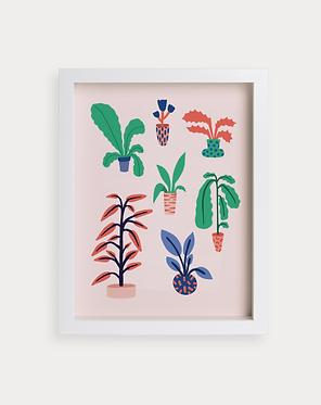 Assortiment de plantes