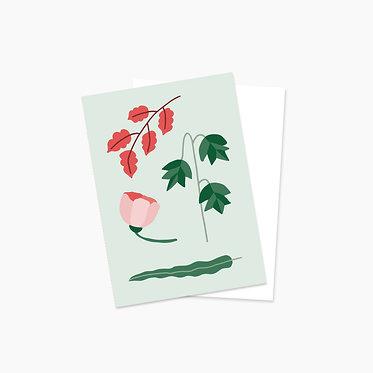 Plantes automnales - verte