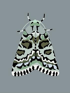 Bryophile du lichen