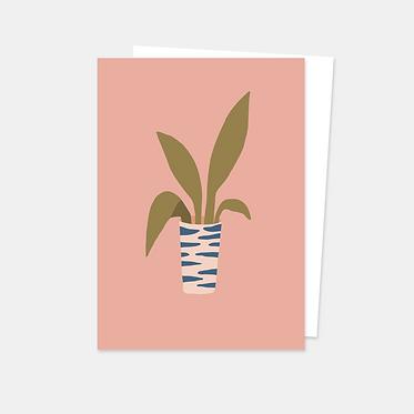 Plante de salon rose