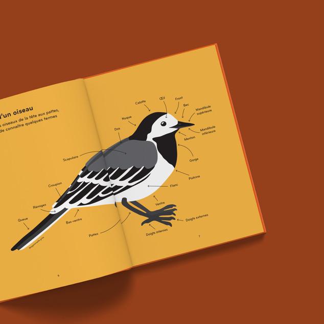 ornithorama - bergeronnette
