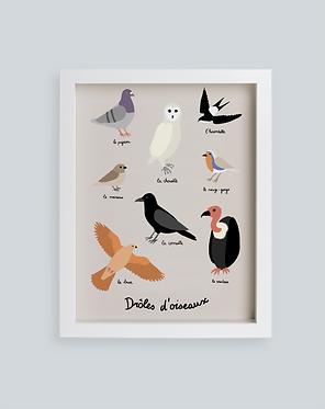 Drôles d'oiseaux