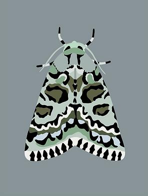 2-bryophile du lichen_Plan de travail 1.