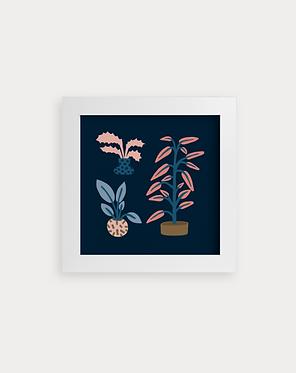 Trois plantes de salon