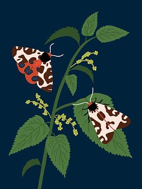 Papillons (Écailles martres)