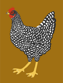 5-poule-Plymouth.png
