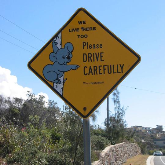 koala sign.jpg
