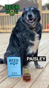 BeerDog_Paisley.jpg