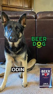 BeerDog_Odin.jpg