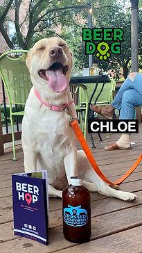 BeerDog_Chloe.jpg