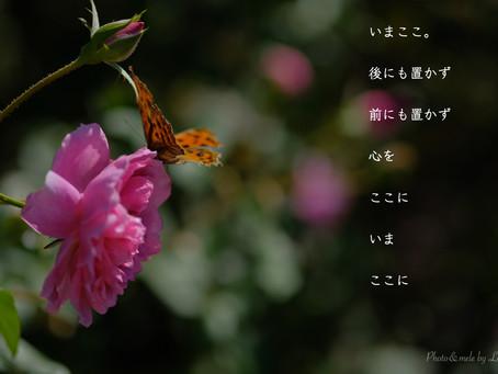 今週のポエム Loco's Mele(11/5/2018)