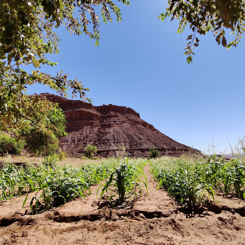 Traditional Desert Farming