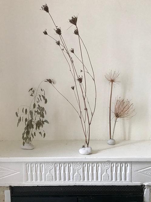 Jardin d'interieur | fleurs de carottes sauvages à l'Automne | N.1