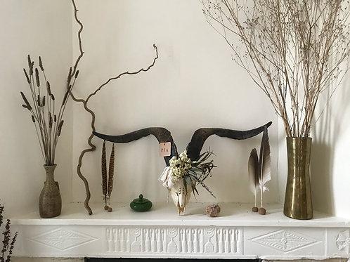Tete de bouquetin véritable | sanctuary