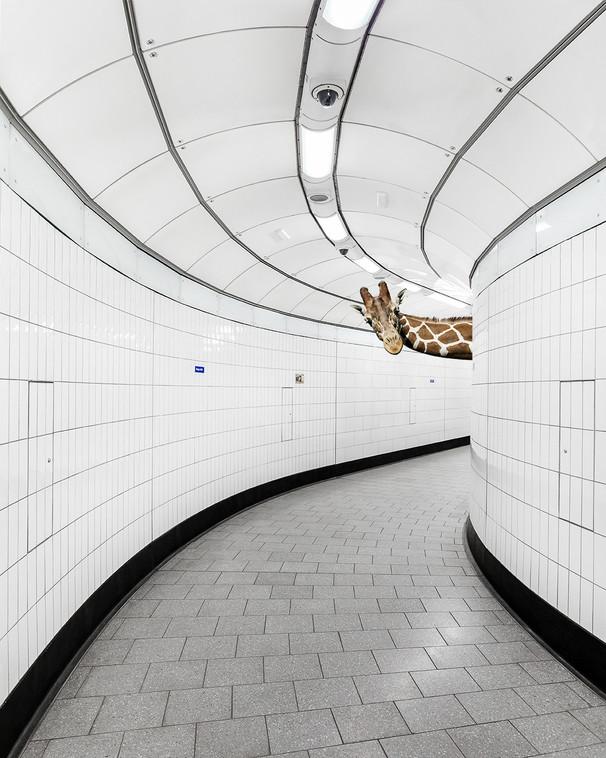 giraffe in metro.jpg