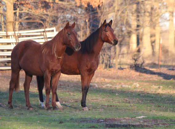 Cowboy Stoli Filly and Torres Dream 2 ye