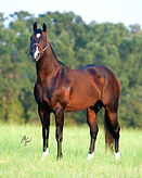 2003 Bay Stallion (Peptoboonsmal X Glow A Freckle by Colonel Freckles)